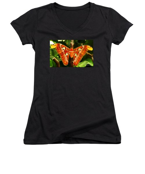 Snake Head Women's V-Neck T-Shirt (Junior Cut) by Clare Bevan