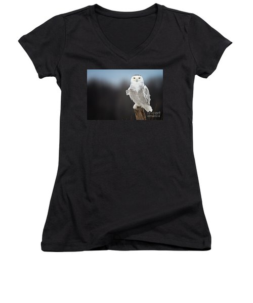Snowy Owl Pictures 13 Women's V-Neck