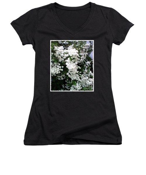 Spirea Bridal Veil Women's V-Neck T-Shirt (Junior Cut) by Barbara Griffin