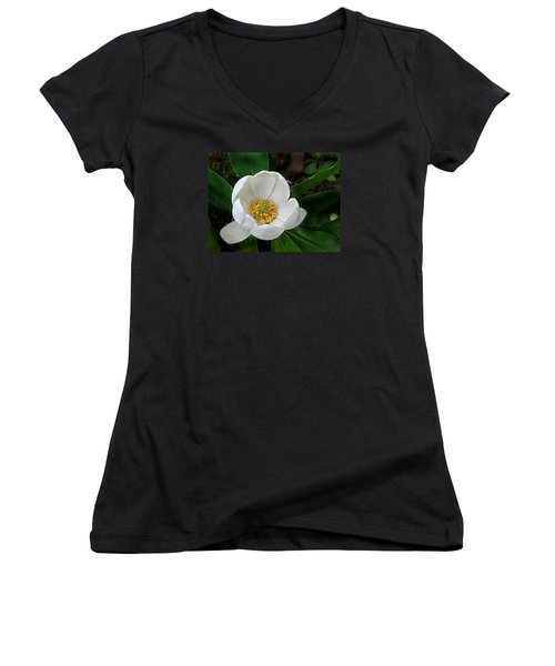 Sweetbay Magnolia Women's V-Neck T-Shirt (Junior Cut) by William Tanneberger