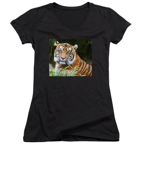 The Eyes Of A Sumatran Tiger Women's V-Neck T-Shirt (Junior Cut) by Emmy Marie Vickers