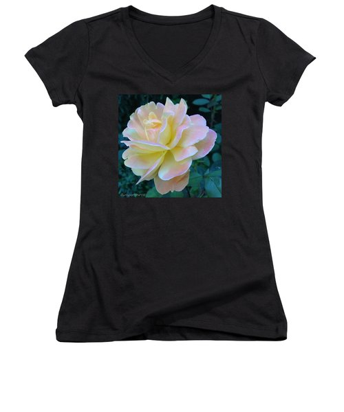 The Rose For A Rose Is A Rose Is A Rose Women's V-Neck (Athletic Fit)