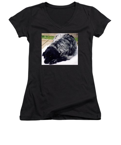 The Shaggy Dog Named Shaddy Women's V-Neck T-Shirt (Junior Cut) by Marian Cates