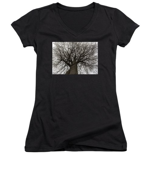 Tree Web Women's V-Neck T-Shirt