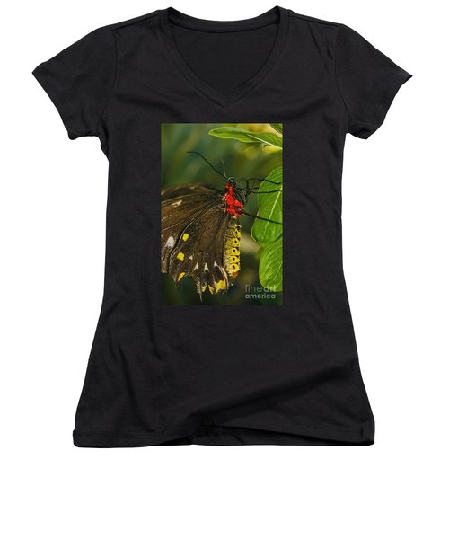 Women's V-Neck T-Shirt (Junior Cut) featuring the photograph Troides Helena Butterfly  by Olga Hamilton