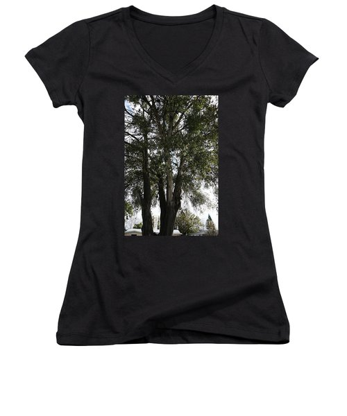 Up-view Of Oak Tree Women's V-Neck