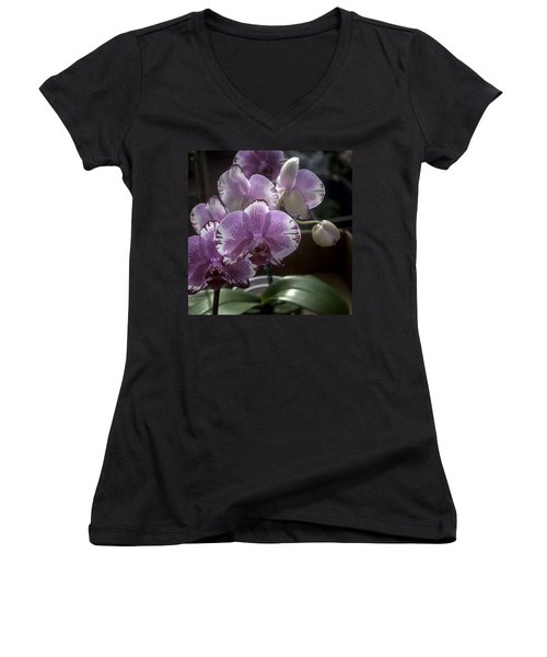 Variegated Fuscia And White Orchid Women's V-Neck T-Shirt