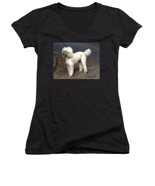White Poodle Women's V-Neck (Athletic Fit)