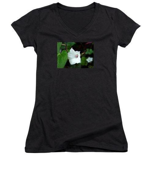Wild Whitestar Morning Glory Women's V-Neck T-Shirt (Junior Cut) by William Tanneberger