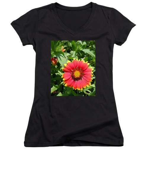 Women's V-Neck T-Shirt (Junior Cut) featuring the photograph Wild Red Daisy #2 by Robert ONeil