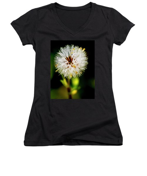 Women's V-Neck T-Shirt (Junior Cut) featuring the photograph Winter Dandelion by Pedro Cardona