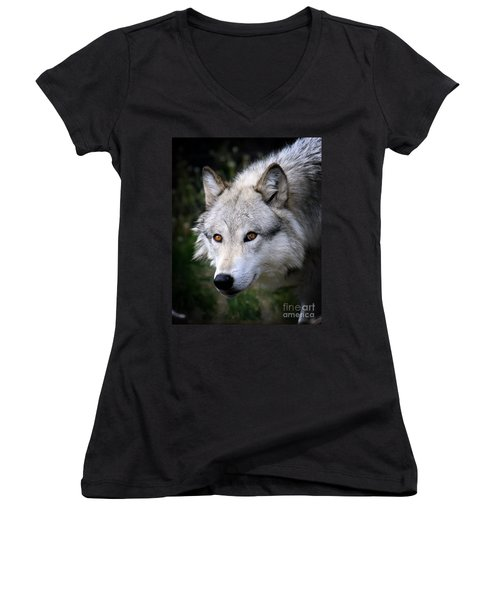Wolf Stare Women's V-Neck T-Shirt (Junior Cut) by Steve McKinzie