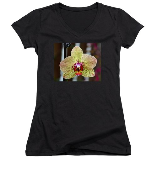 Yellow And Maroon Orchid Women's V-Neck T-Shirt (Junior Cut) by Kathy Eickenberg