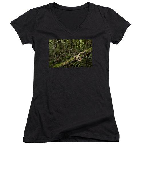 Boa Constrictor Boa Constrictor Coiled Women's V-Neck T-Shirt