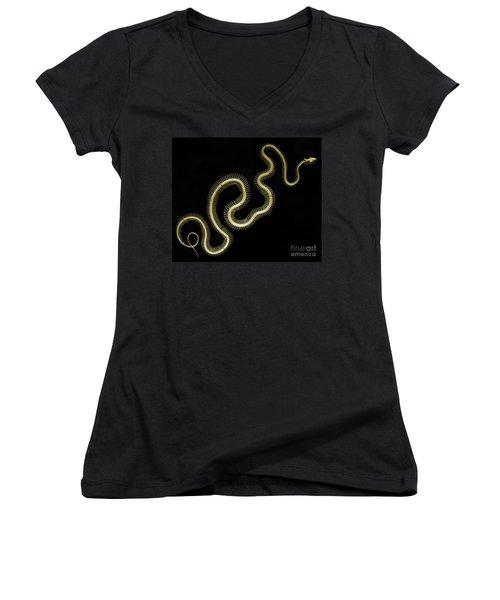 Boa Constrictor Skeleton Women's V-Neck T-Shirt (Junior Cut) by Bob Christopher