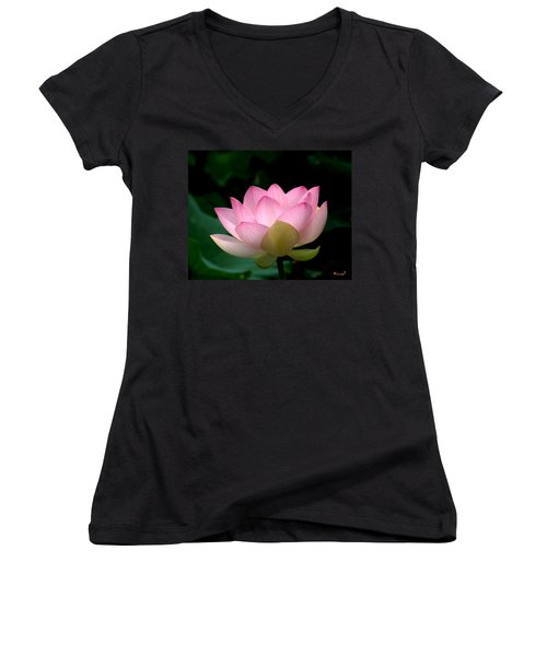 Lotus Beauty--blushing Dl003 Women's V-Neck T-Shirt