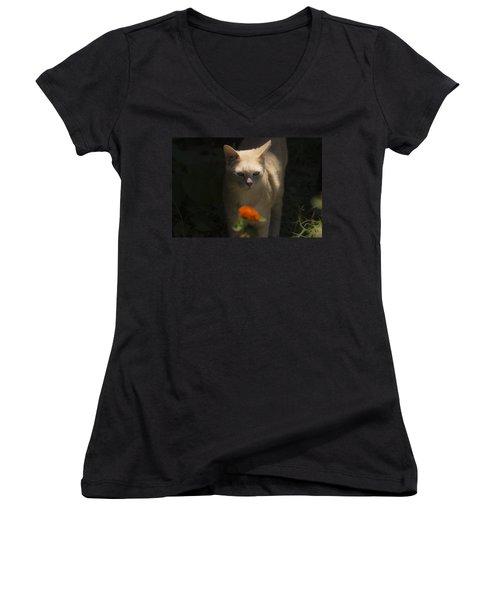 Many Moods Of Kitty Women's V-Neck T-Shirt