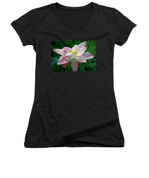 Pink Attraction Women's V-Neck T-Shirt (Junior Cut) by LeeAnn McLaneGoetz McLaneGoetzStudioLLCcom