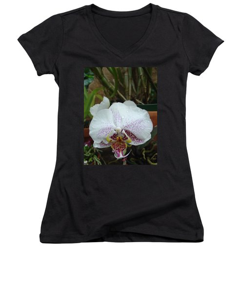 Rain Drops On Orchid Women's V-Neck