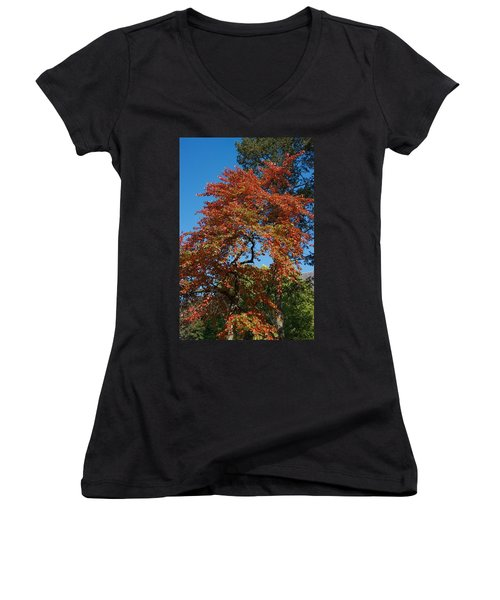 Women's V-Neck T-Shirt (Junior Cut) featuring the photograph Soaring Fall by Joseph Yarbrough