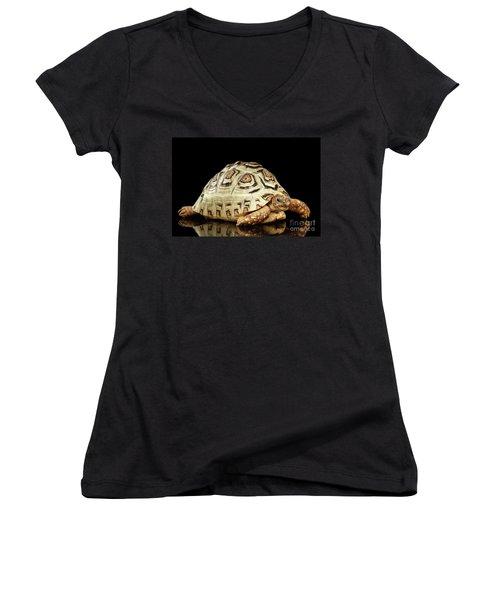 Closeup Leopard Tortoise Albino,stigmochelys Pardalis Turtle With White Shell On Isolated Black Back Women's V-Neck T-Shirt (Junior Cut) by Sergey Taran