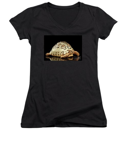 Closeup Leopard Tortoise Albino,stigmochelys Pardalis Turtle With White Shell On Isolated Black Back Women's V-Neck T-Shirt