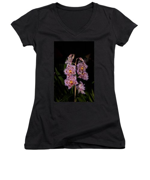 Cattleya Style Orchids Women's V-Neck T-Shirt