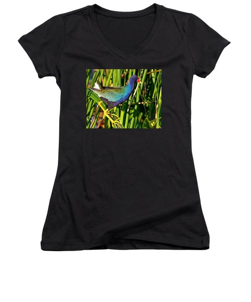 Purple Gallinule Women's V-Neck