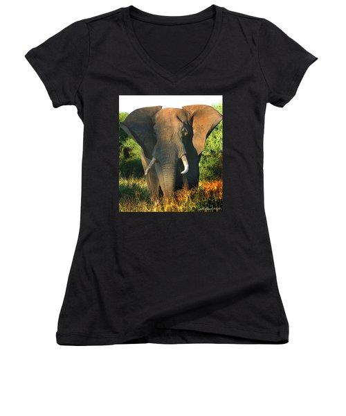 African Bull Elephant Women's V-Neck (Athletic Fit)