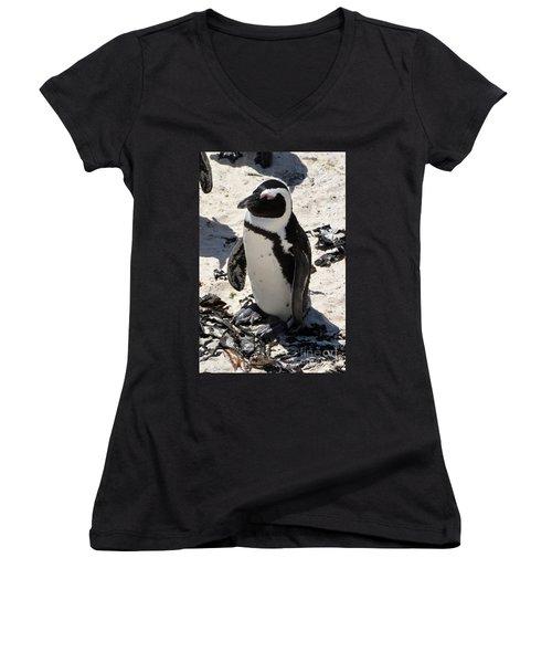Women's V-Neck T-Shirt (Junior Cut) featuring the digital art African Penguin 1 by Eva Kaufman