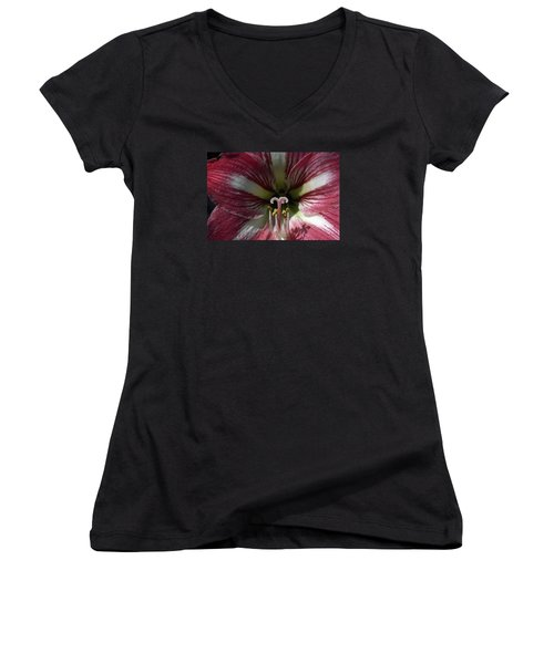 Women's V-Neck T-Shirt (Junior Cut) featuring the photograph Amaryllis Flower Close-up by Sally Weigand