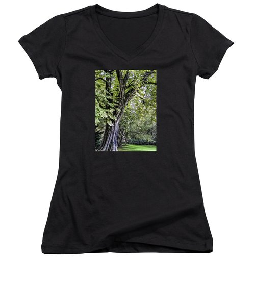 Ancient Tree Luxembourg Gardens Paris Women's V-Neck T-Shirt (Junior Cut) by Sally Ross