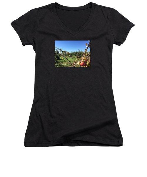 Apple Orchard 1 Women's V-Neck T-Shirt (Junior Cut) by Jason Nicholas