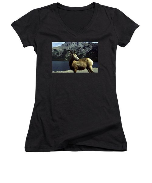 Women's V-Neck T-Shirt (Junior Cut) featuring the photograph Bighorn Sheep by Sally Weigand