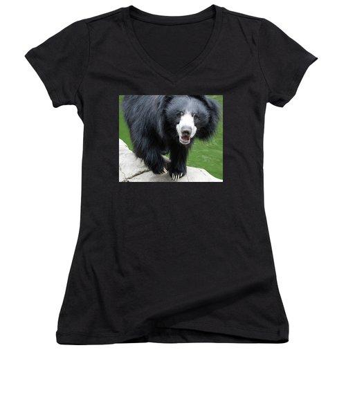Sun Bear Women's V-Neck T-Shirt (Junior Cut) by Inspirational Photo Creations Audrey Woods
