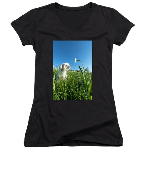 Blooming Daffodils In The Antola Park With Maltese IIi Women's V-Neck