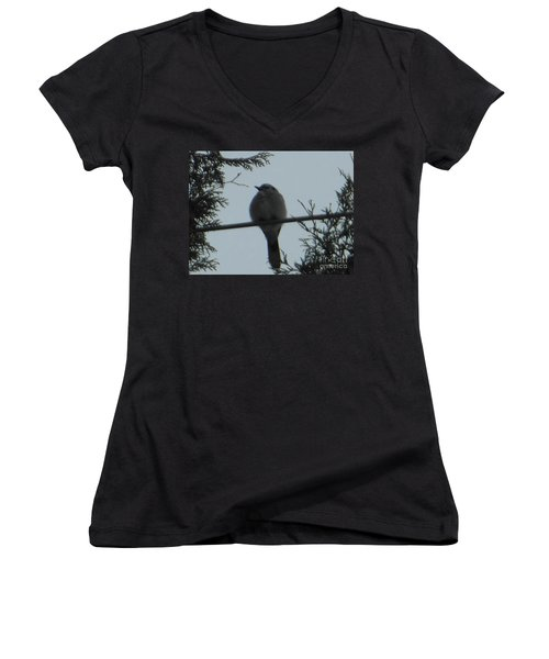 Blue Jay On Wire Women's V-Neck