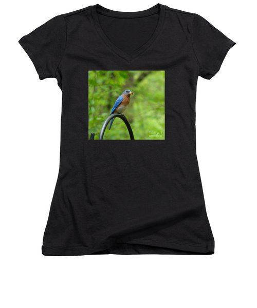 Bluebird Catches Worm Women's V-Neck (Athletic Fit)