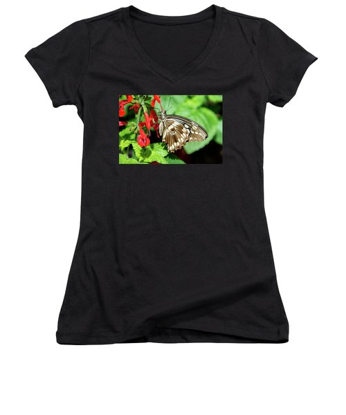 Brown Swallowtail Butterfly Women's V-Neck