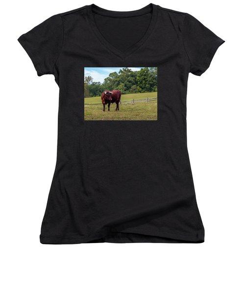 Bull In Field Women's V-Neck T-Shirt