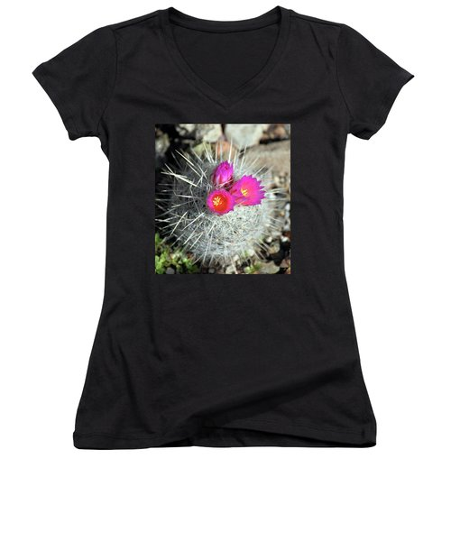 Chihuahua Snowball 1 Women's V-Neck (Athletic Fit)