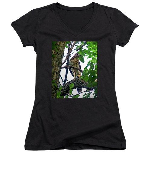 Cooper Hawk Women's V-Neck T-Shirt (Junior Cut) by Sue Stefanowicz