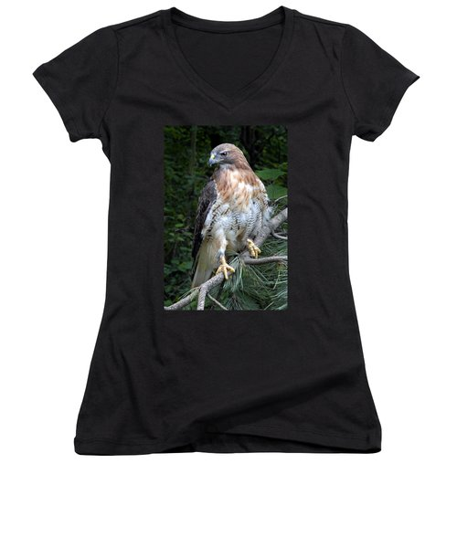 Coopers Hawk Women's V-Neck T-Shirt (Junior Cut) by Dave Mills
