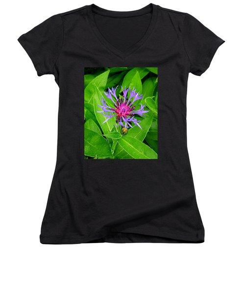 Centaurea Montana Women's V-Neck