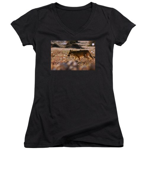 Death Valley Coyote And Flowers Women's V-Neck T-Shirt