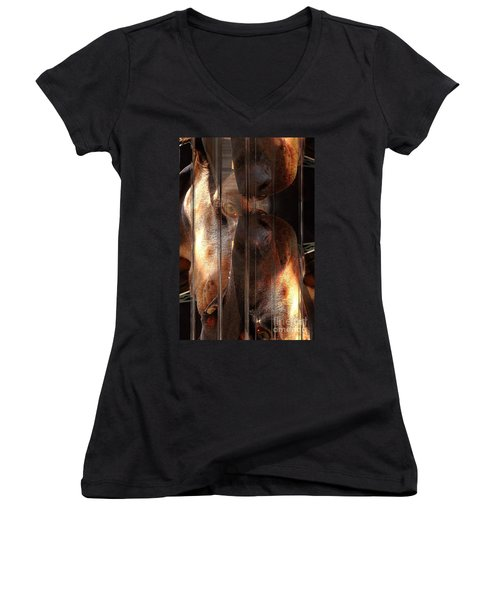 Doberman Pincher Women's V-Neck T-Shirt (Junior Cut) by Liane Wright