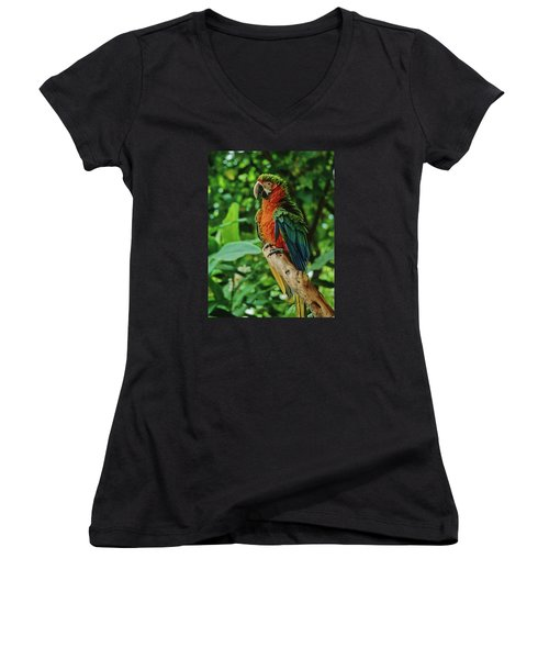 Women's V-Neck T-Shirt (Junior Cut) featuring the photograph Don't Ruffle My Feathers by Marie Hicks