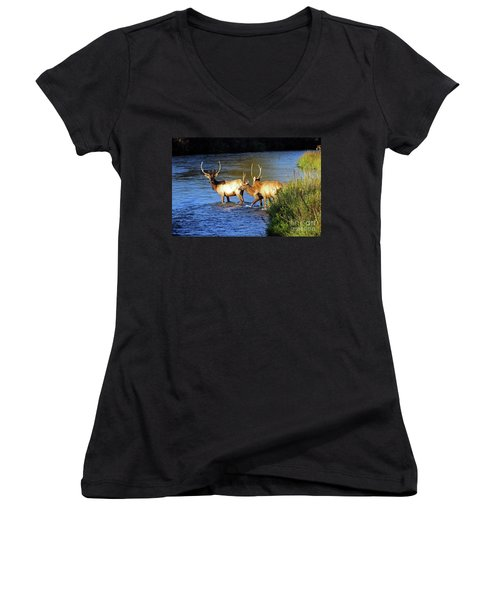 Elk Women's V-Neck T-Shirt (Junior Cut) by Cindy Murphy - NightVisions
