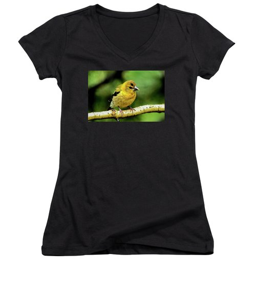 Evening Grosbeak Baby Women's V-Neck T-Shirt (Junior Cut) by Marilyn Burton