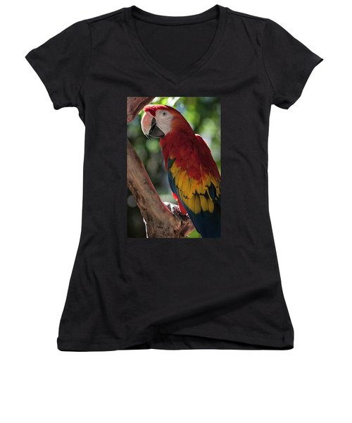 Feathered Rainbow Women's V-Neck T-Shirt (Junior Cut)